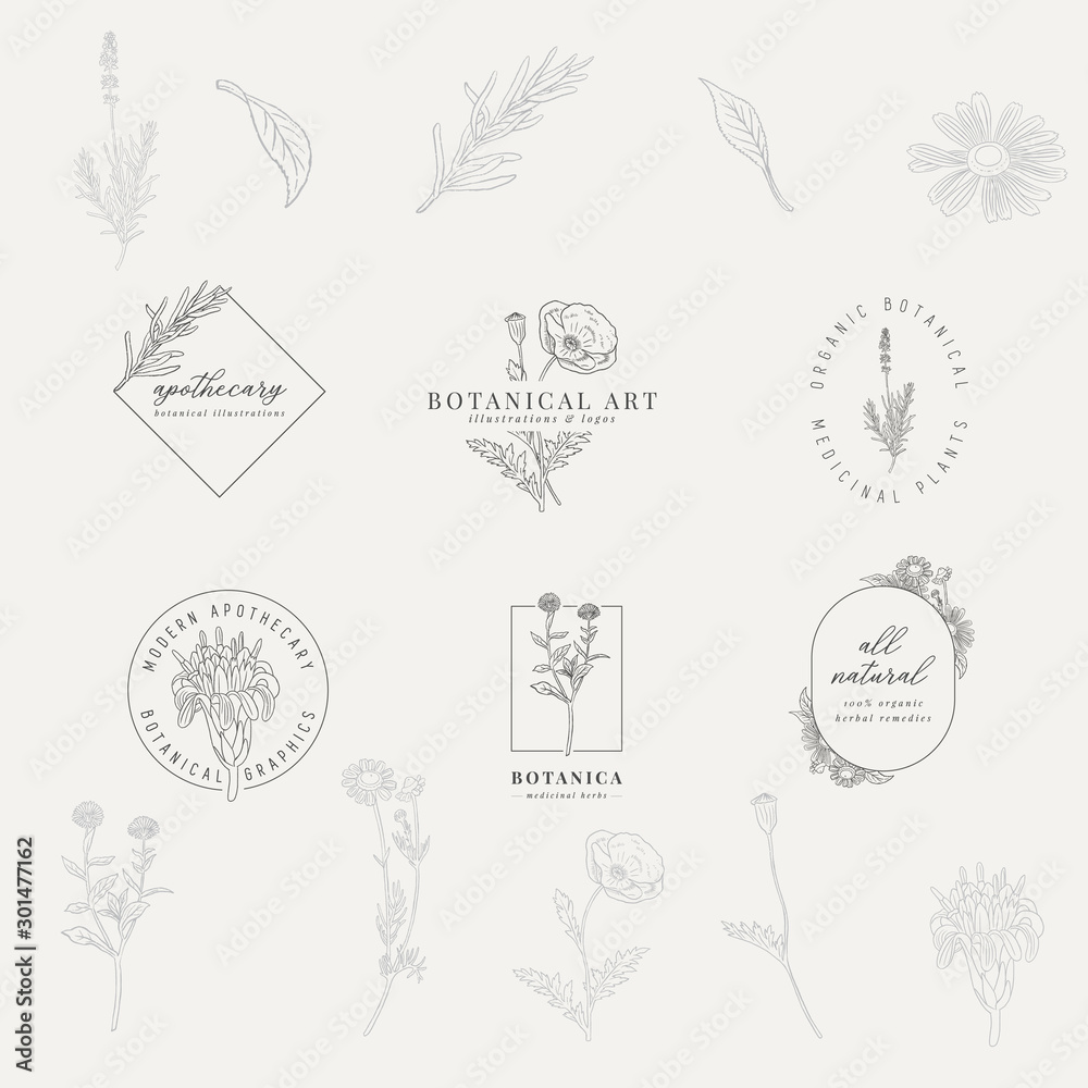 Fototapeta Set of 6 botanical logos. Hand drawn botanical illustrations with various plants and herbs.