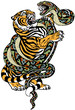 fight between tiger and snake. Angry reptile coiled the big cat. Graphic style vector illustration. Tattoo