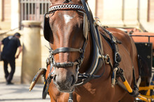 Horse For Carriage, Seville, S...