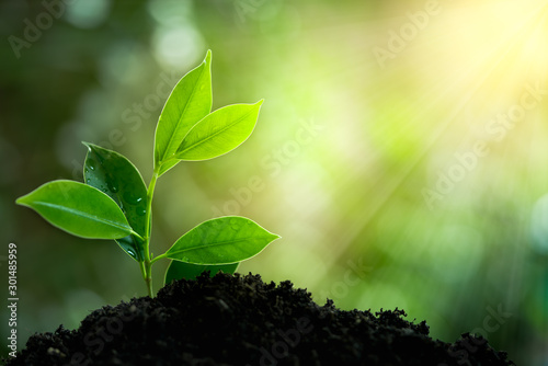 Fototapeta Natural green plant with rays of light. Nature and fresh background for environmental saving concept. obraz