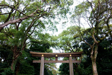 Japanese Traditional Torii Mei...