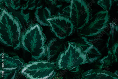 Fototapety, obrazy: Creative tropical green leaves layout. Concept : Green leaves pattern background / Nature spring.