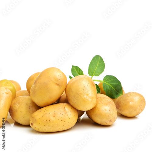 Leinwand Poster New potato isolated on white background