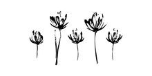 Set Of Hand Drawn Abstract Modern Flowers Silhouette Brush Ink Painting. Grunge Style Ink Painted Elements For Design. Black Isolated Vector On White Background