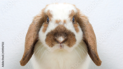 Photo Lovely bunny easter brown rabbit on wooden table