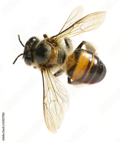 Recess Fitting Bee a Bee isolated on the white background