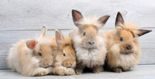 Group Of Lovely Bunny Easter R...