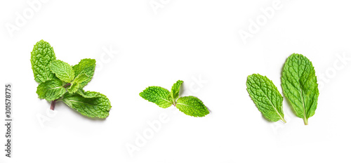 Obraz fresh peppermint leaves on isolated white background - fototapety do salonu