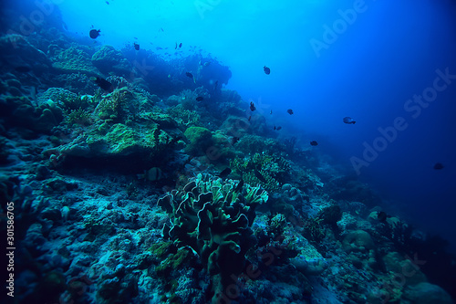 Obraz coral reef underwater / sea coral lagoon, ocean ecosystem - fototapety do salonu