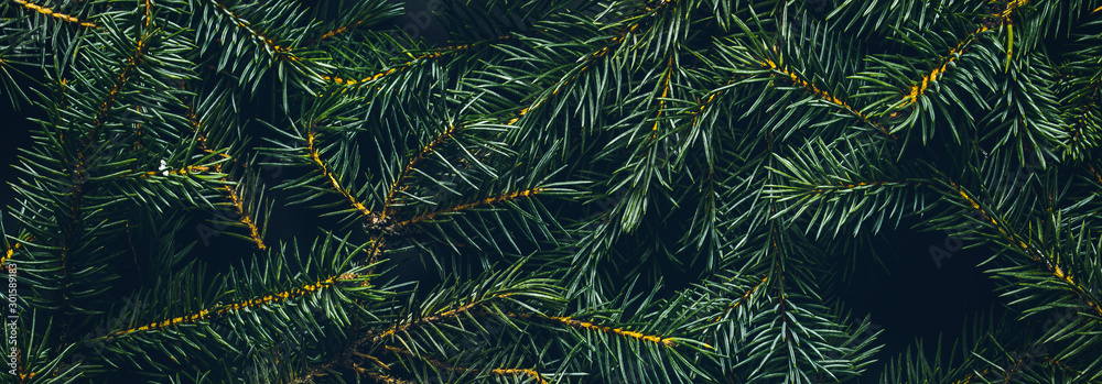 Fototapeta Christmas tree branches. The concept of the new year, christmas, nature. Banner. Flat lay, top view