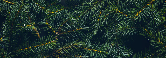 Christmas tree branches. The concept of the new year, christmas, nature. Banner. Flat lay, top view