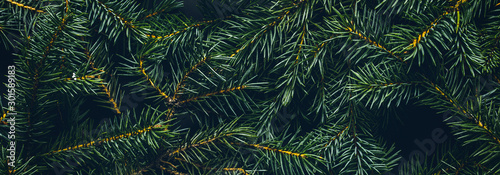 Poster Pays d Europe Christmas tree branches. The concept of the new year, christmas, nature. Banner. Flat lay, top view