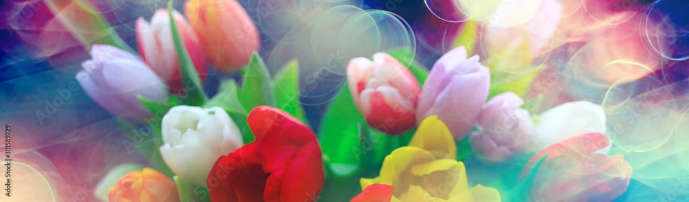 Fototapety, obrazy: bouquet of colorful tulips / spring flowers, bright beautiful flowers, spring gift concept