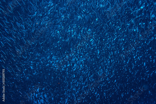 Fotografija  scad jamb under water / sea ecosystem, large school of fish on a blue background