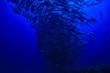 canvas print picture - coral reef underwater / lagoon with corals, underwater landscape, snorkeling trip