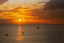 Sunset And Starling Murmuratio...