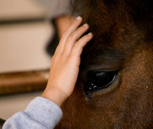 Child's Hand Touching A Horse'...
