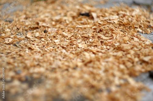 Fotografia, Obraz Close up saw dust. Wooden industry. Sawmill