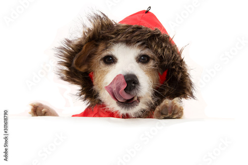 Photo  cute puppy with paws over white sign wearing a red anorak or winter coat linking with tongue out