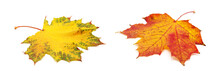 Autumn Maple Leaf Isolated On ...