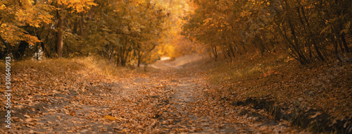 Recess Fitting Deep brown autumn scene, the fallen leaves on the ground on the road in the forest
