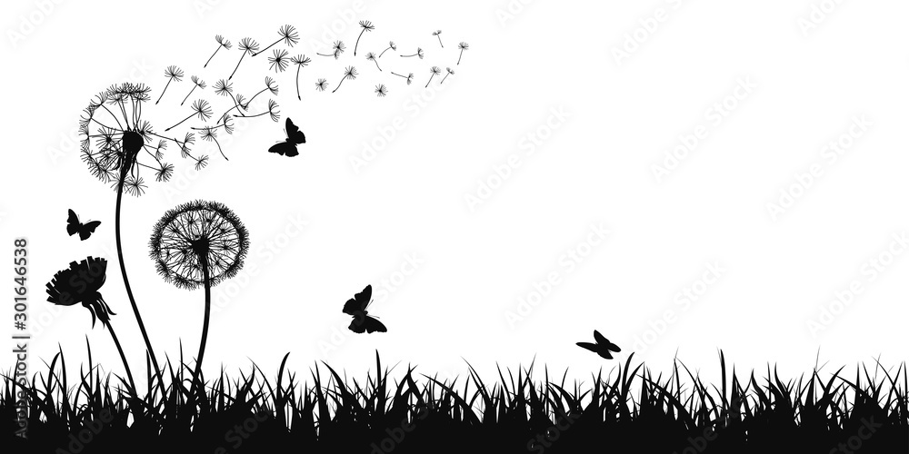Fototapety, obrazy: Abstract black dandelion silhouette, flying seeds of dandelion, butterfly, grass, field, nature eco background - stock vector