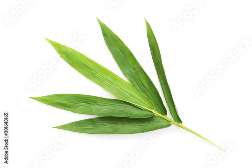 Fresh bamboo leaves isolated on white background. Canvas Print