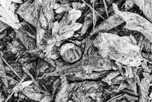 Chestnut Stuck In Autumn Dark ...
