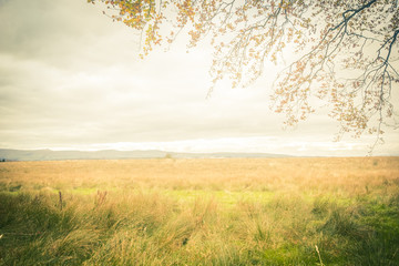 FototapetaDreamy autumnal background with fantasy landscape and tree branches