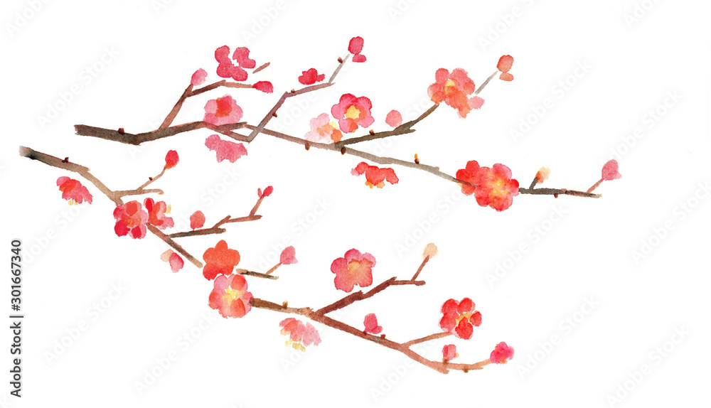 Fototapeta 梅の花