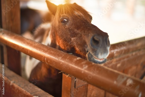 Beautiful brown horse with adorable face waiting at barn Wallpaper Mural