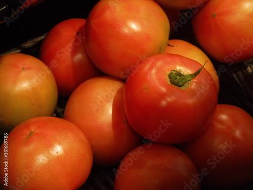 トマト ー Tomato Wallpaper Mural