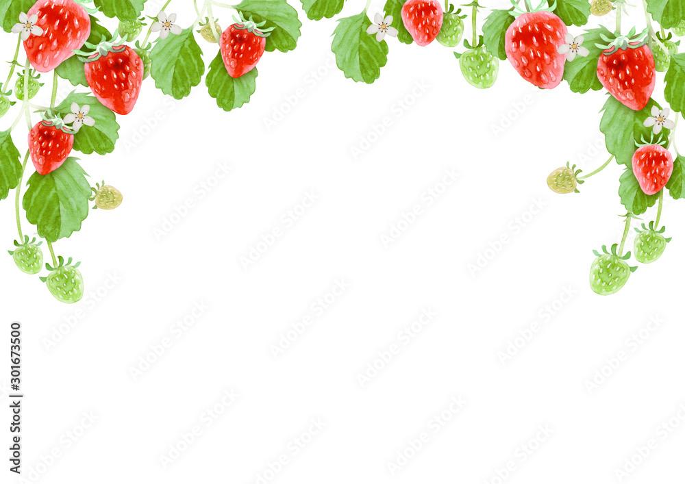 Fototapety, obrazy: イチゴ 背景 フレーム 水彩 イラスト