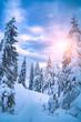 Leinwanddruck Bild - Bright sunshine illuminates the forest