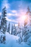 Fototapeta Fototapety na ścianę - Bright sunshine illuminates the forest