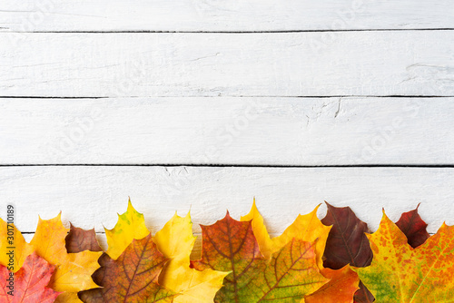 Colourful maple leaves on white wooden background with copyspace. Autumn concept