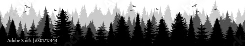 Photo Conifer Tree Forest Landscape Vector Silhouette