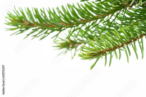 Autocollant pour porte Arbre Fresh spruce green branch isolated on white