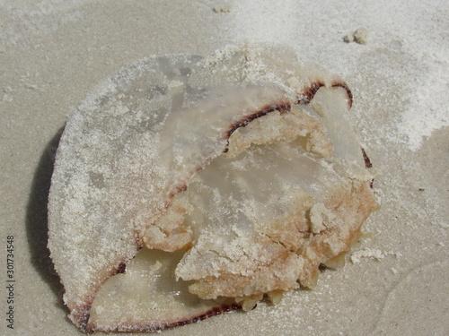 Photo Medusa muerta en la arena