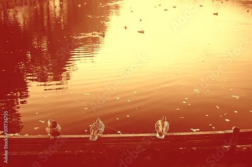 Foto auf AluDibond Violett rot gloomy autumn on the lake sadness / autumn stress, seasonal landscape nature on the lake