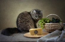 Gray Kitty And Mouse In Cheese...
