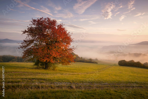 Fall in Slovakia. Meadows and fields foggy landscape near Banska Bystrica. Autumn colored cherry tree at sunrise - 301741577