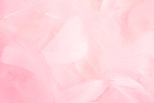 Soft Pink Feathers Background