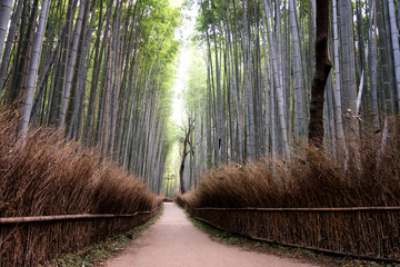 Beautiful Arashiyama Bamboo...