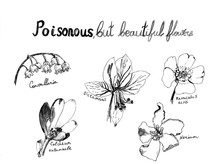 Set Of Poisonous Flowers And H...