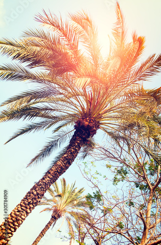 Foto-Schiebegardine Komplettsystem - Palm trees against blue sky, Palm trees at tropical coast, vintage toned and stylized, coconut tree, summer tree, vacation travel concept