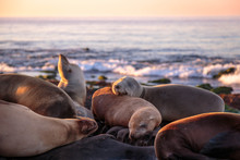 Seals Enjoying Sunset