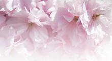 Flower Spring Bouquet. Soft Fo...