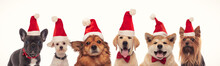 Happy Christmas Dogs In A Line...