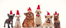 Group Of Adorable Santa Dogs I...
